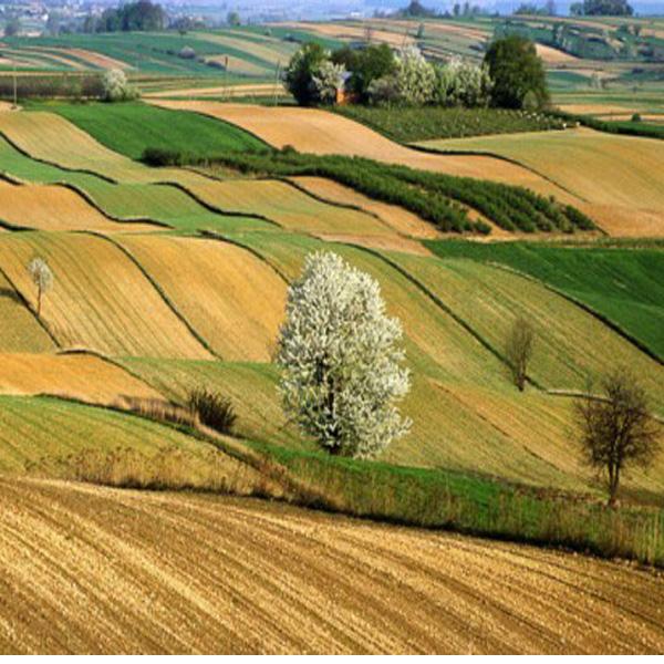 Nuovi bandi dal Piano di Sviluppo Rurale