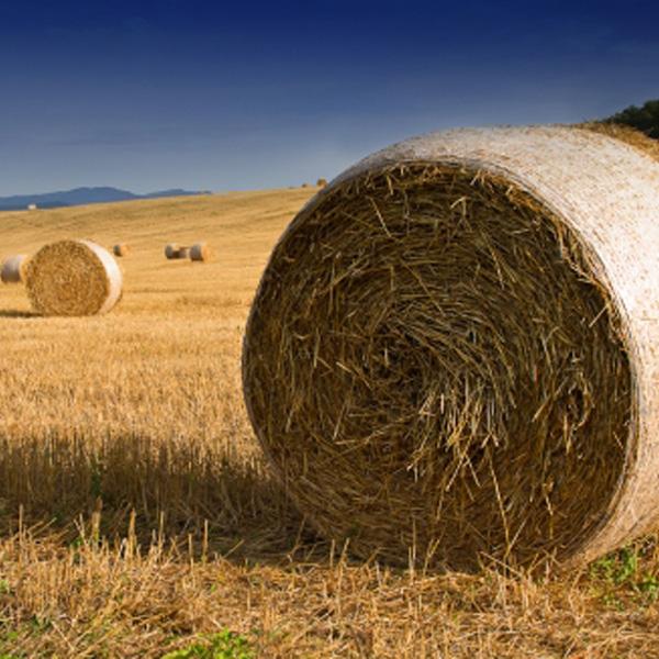 Incentivi dal Piano di Sviluppo Rurale