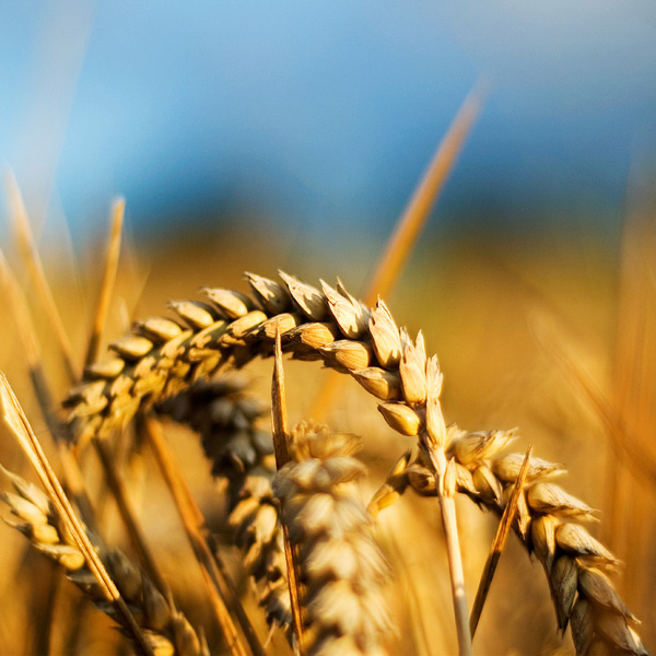 Opportunità dal Piano di Sviluppo Rurale