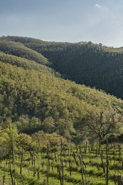 Lisciano Niccone - colline valle