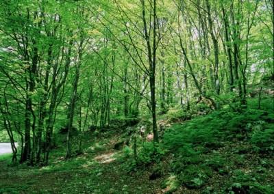 Parco del Monte Cucco - 9