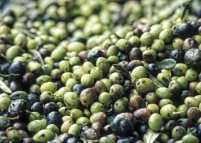 Prodotti tipici - Olive 2