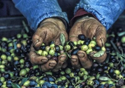 Prodotti tipici - Olive